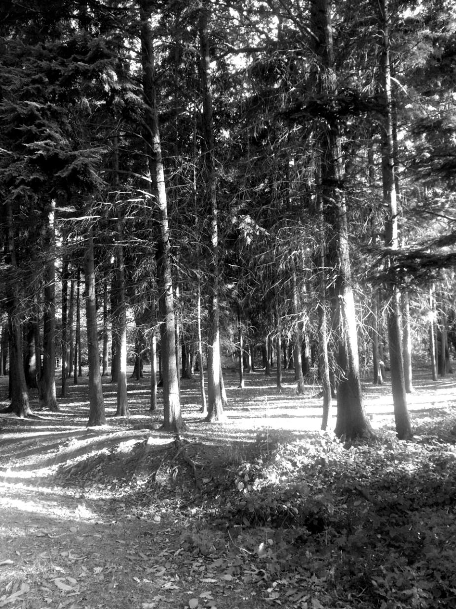 Berkshire.